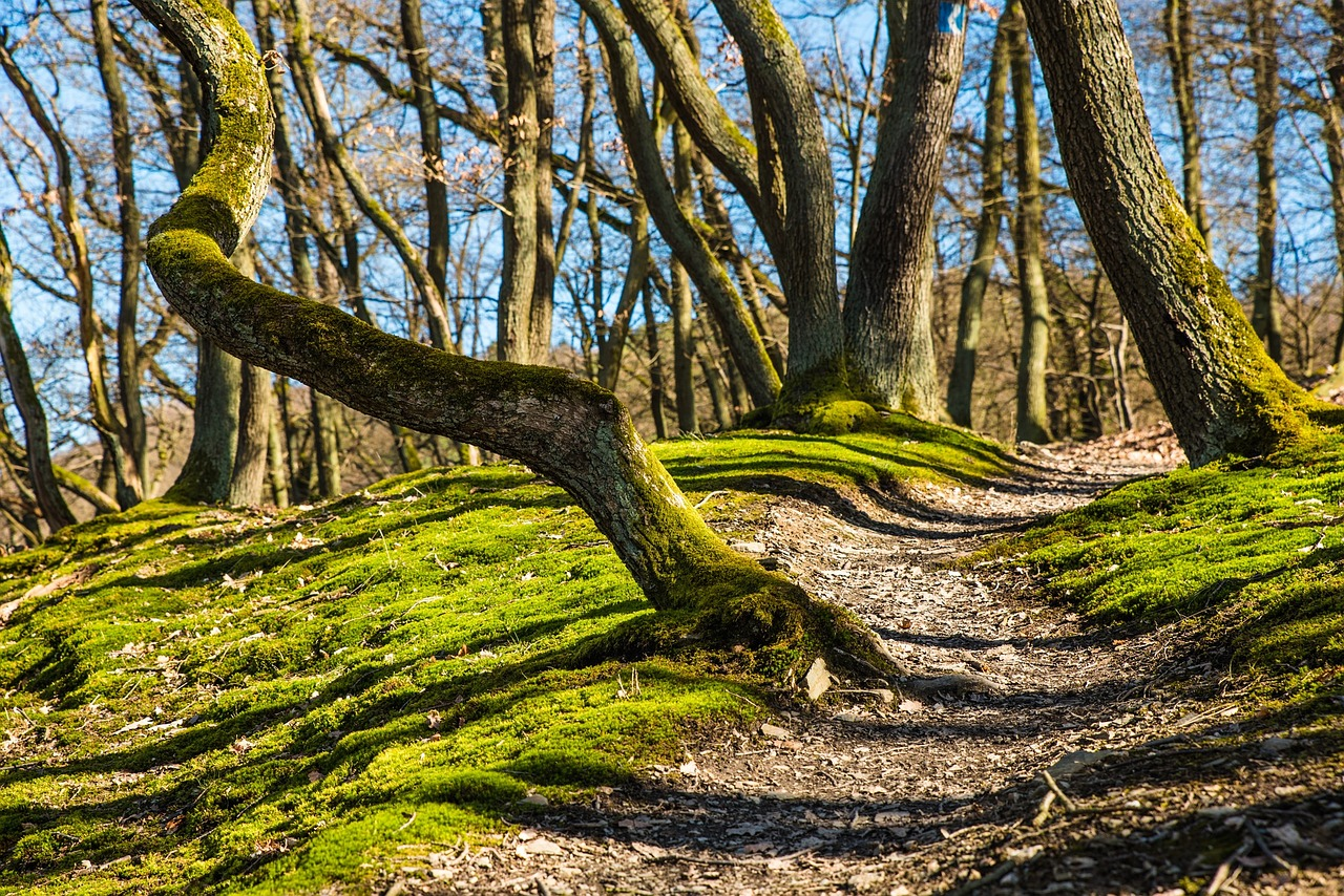wandelingen in het bos