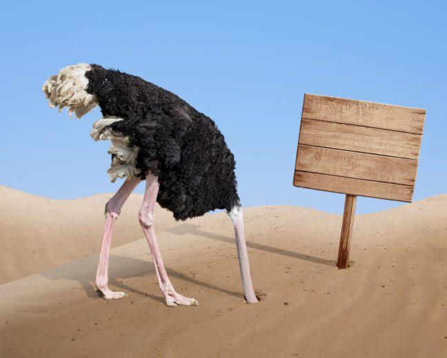 financieel plan - kop in het zand